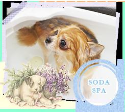 SODASPA