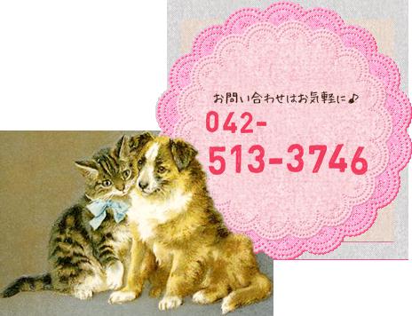 TEL:042-513-3746